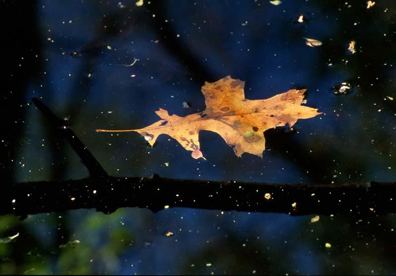 Oak Nebula