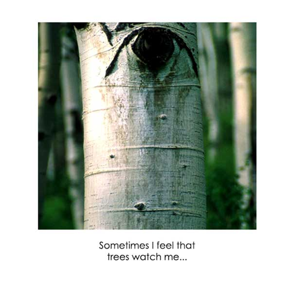 Trees Watch Me