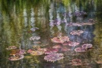 Monet's Water Lily Pond