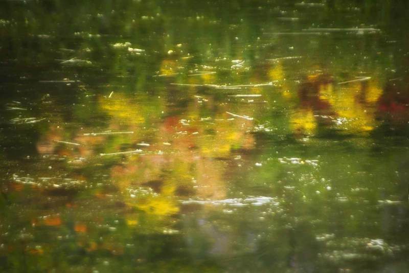 The Pond #2