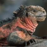 Galapagos: Face to Face