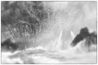 Water Music Series #5057