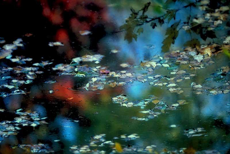 D'Apres Monet