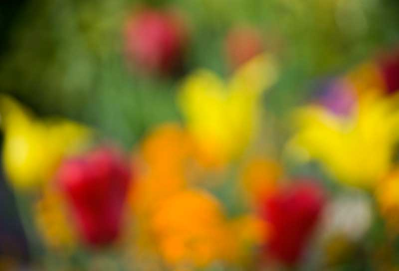 Giverny Spring 2