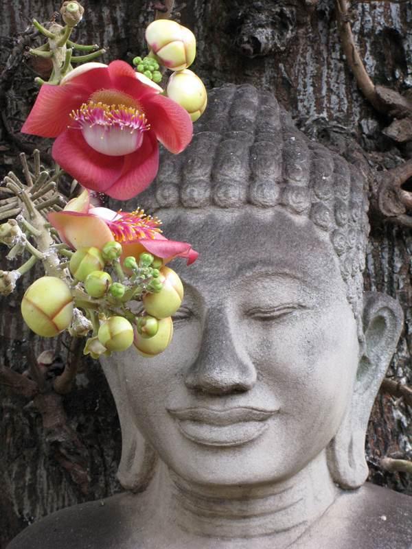 Buddha with Lotus #2