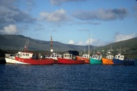 Boats in Valentia Harbor