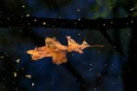 Oak Nebulae
