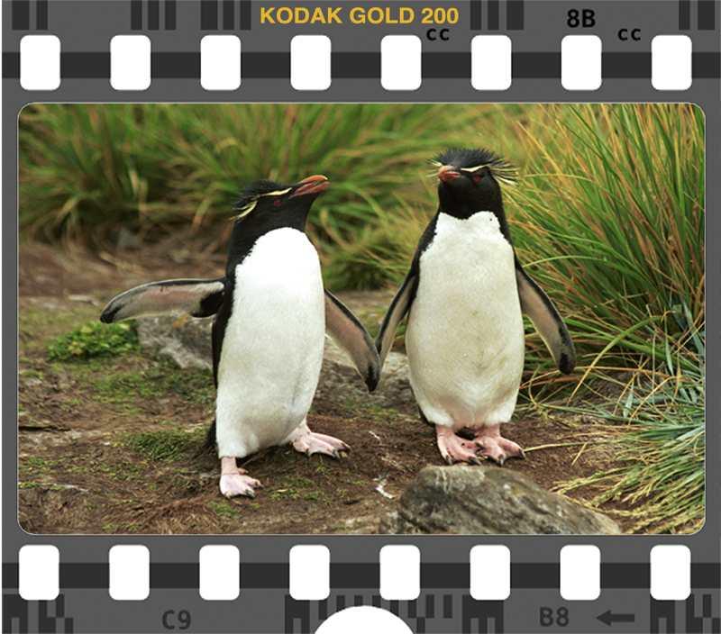 Kodak Gold 200 RockH
