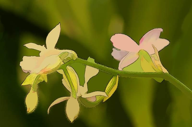 Orchid Trio #3