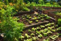 Organic Patchwork