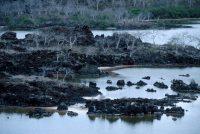 Floreana Island Landscape, Punta Cormorant