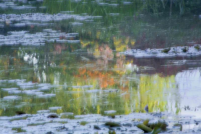 The Pond #1
