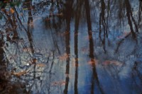 Muttontown Reflection