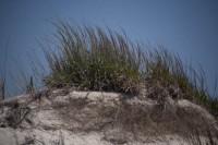 Lido Beach Sand Dune