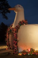 The Long Island Big Duck