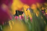 Beneath the Blooms