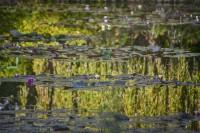 Giverny Pond Reflection