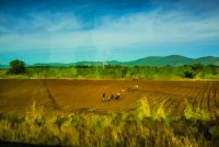 Viñales Valley, Working the Fields