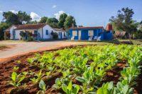 Tobacco Farm Landscape, Viñales Valley