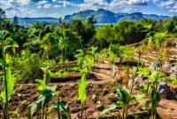 Organic Farm Landscape